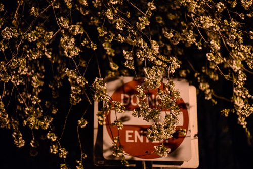 20140415_SpringNight,Tenleytown-48